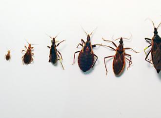 Nuevas Guías sobre Enfermedad de Chagas SIAC