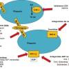 ¿Cómo funcionan los antiagregantes plaquetarios?