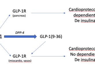 Incretinas y enfermedad cardiovascular