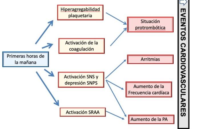 Cronoterapia y Enfermedad Cardiovascular en el hipertenso