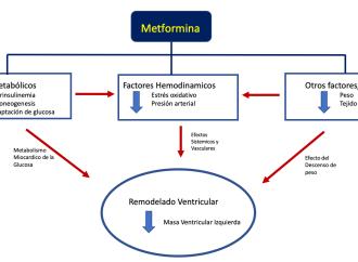 Efecto de la Metformina en la hipertrofia ventricular izquierda Estudio MET-REMODEL