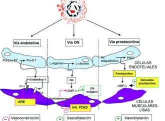 Farmacología de la Hipertensión Pulmonar