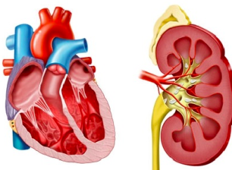 Síndrome cardiorrenal e Insuficiencia Cardíaca: Desafíos y oportunidades
