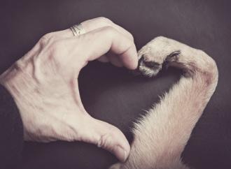 Tener perro como mascota mejora la sobrevida luego de un evento cardiovascular mayor