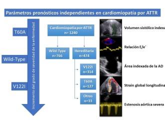 Amiloidosis cardíaca por transtiretina: Fenotipos ecocardiográficos y pronósticos