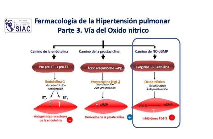 Farmacología de la hipertensión pulmonar  Parte 3. Vía del óxido nítrico