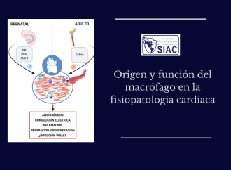 Origen y función del macrófago en la fisiopatología cardiaca
