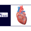 Evolución a largo plazo luego de la revascularización miocárdica en pacientes con anatomía de alto riesgo con enfermedad cardiaca estable