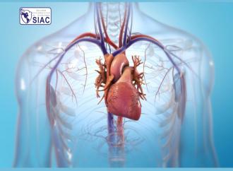 Inhibidores del co-transportador sodio-glucosa tipo 2: mecanismos de acción en insuficiencia cardiaca